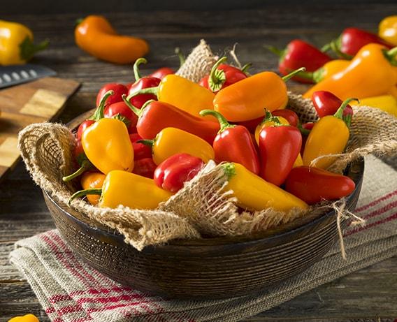 Os diferentes tipos de pimentos